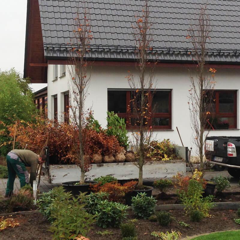 Baumpflanzung Hövelhof